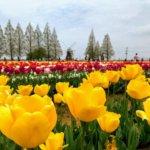 『あけぼの山公園・柏』季節を彩るお花畑とイルミネーション風車のある公園