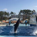 北陸旅②バスで巡る越前松島水族館から雄島周辺観光
