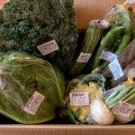 『食べチョクコンシェルジュ』佐倉市の在来農場さんのSプラン・オーガニック野菜の宅配