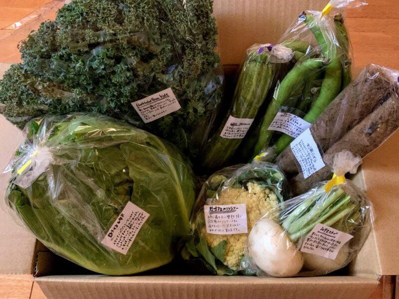 千葉県 佐倉市の在来農場さんのお野菜