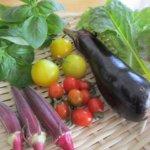 『シロさんのレシピ④夏野菜カレー』きょう何食べる?YouTube